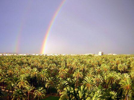 El Palmeral de Europa en Elche, patrimonio Unesco